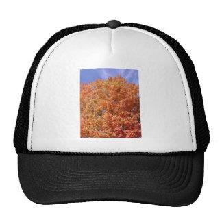 Orange Autumn Trees Mesh Hats