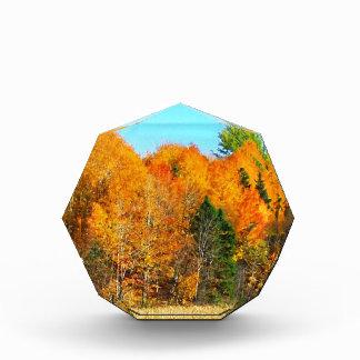 Orange Autumn Trees Newfoundland Canada Photo Art Awards