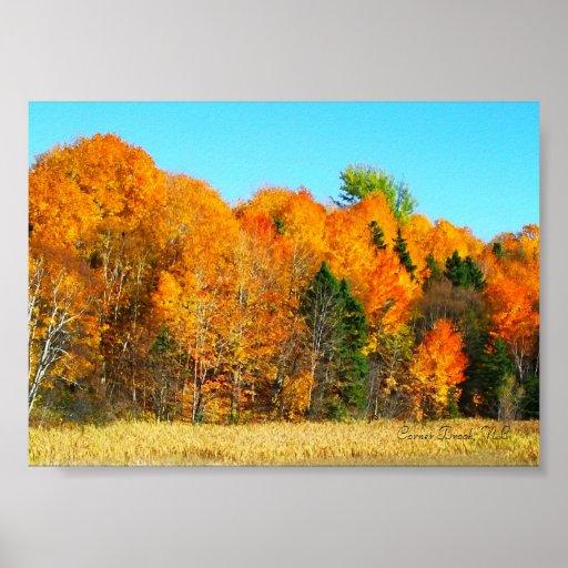 wallpaper canada trees newfoundland - photo #16
