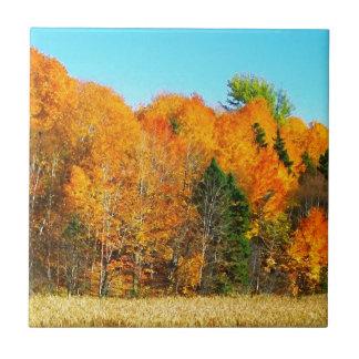 Orange Autumn Trees Newfoundland Canada Photo Art Ceramic Tiles