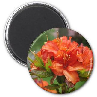 Orange AZALEA 14 FLOWERS Azaleas Cards Gifts Mugs Magnet