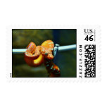 Orange Ball Python Stamp