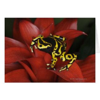 Orange banded dart frog  Dendrobates leucomelas Card