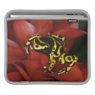 Orange banded dart frog  Dendrobates leucomelas iPad Sleeve