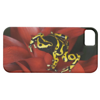 Orange banded dart frog  Dendrobates leucomelas iPhone SE/5/5s Case