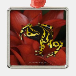 Orange banded dart frog  Dendrobates leucomelas Metal Ornament