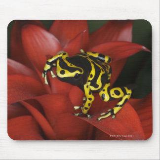 Orange banded dart frog  Dendrobates leucomelas Mouse Pad