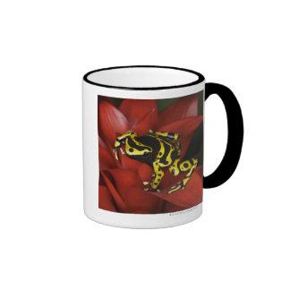 Orange banded dart frog  Dendrobates leucomelas Coffee Mugs