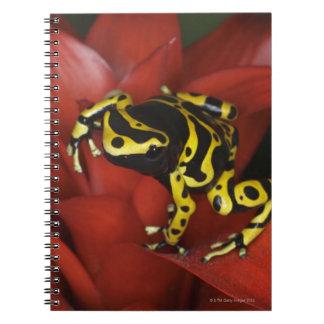 Orange banded dart frog  Dendrobates leucomelas Spiral Note Book