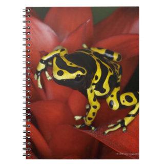 Orange banded dart frog  Dendrobates leucomelas Spiral Notebook