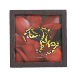 Orange banded dart frog  Dendrobates leucomelas Premium Keepsake Boxes
