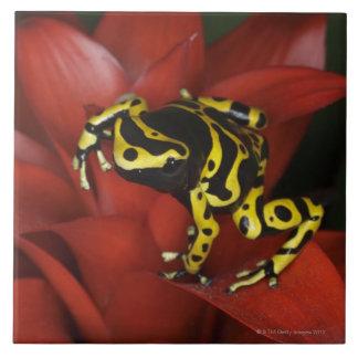 Orange banded dart frog  Dendrobates leucomelas Ceramic Tiles