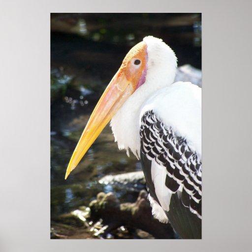 Orange Beaked Bird Poster
