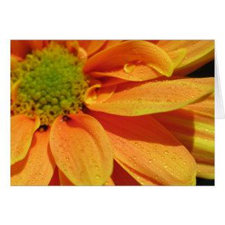 Orange Beauty Card