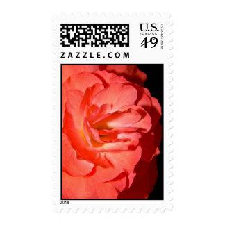 Orange Begonia Postage Stamp