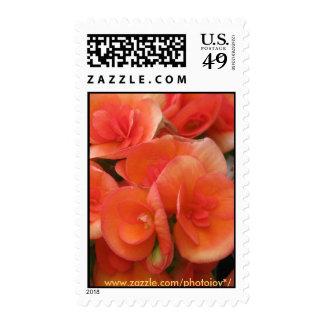 Orange Begonia's Postage Stamp
