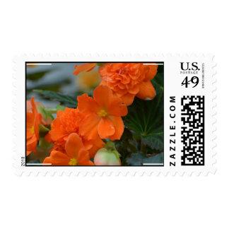 Orange Begonias Stamp