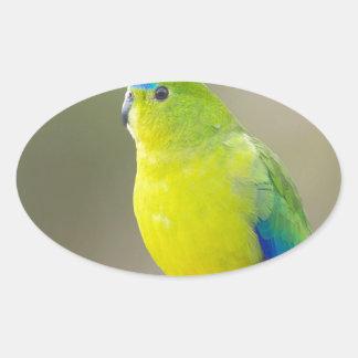 Orange bellied Parrot look forward to love Oval Sticker
