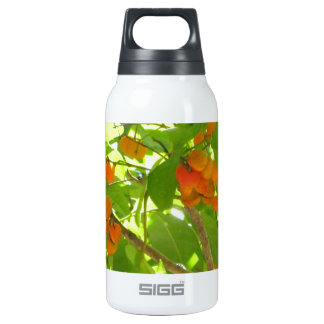 Orange Berries 10 Oz Insulated SIGG Thermos Water Bottle