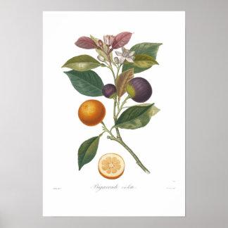 Orange,Bigarrade violette Print