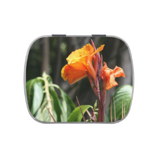 orange bird of paradise flower jelly belly tins