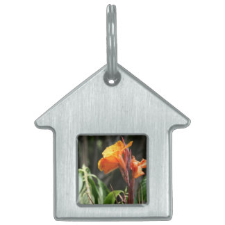 orange bird of paradise flower pet name tags