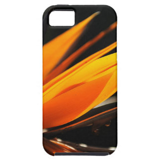 Orange Bird of Paradise Strelitzia iPhone SE/5/5s Case