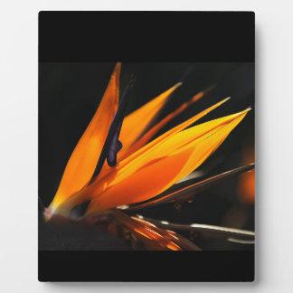 Orange Bird of Paradise Strelitzia Plaque