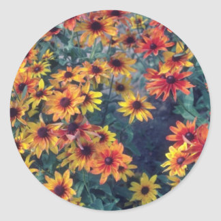 Orange Black Eyed Susan (Rudbeckia Hirta) flowers Stickers