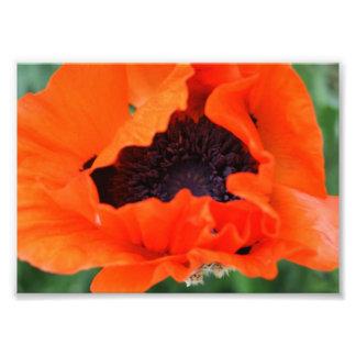 Orange Blast 5x7 Photographic Print