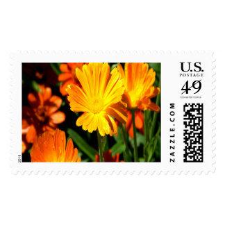 Orange Blooms Large Postage Stamp