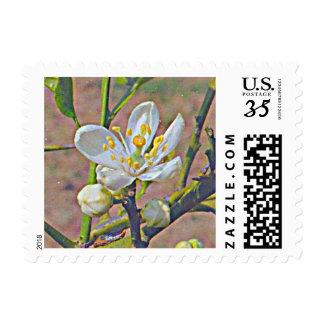 Orange Blossom (Florida) Postage