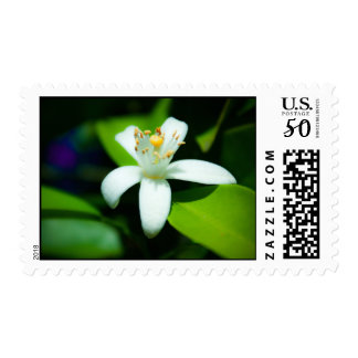 Orange Blossom Postage Stamps