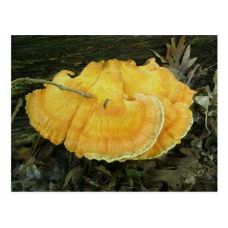 Orange Bracket Fungus Postcard