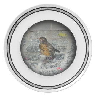 Orange Breasted Bird Plate