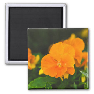 Orange brown hearts-ease refrigerator magnets