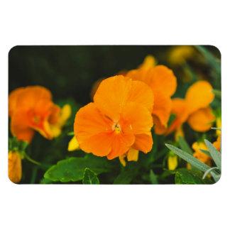 Orange brown hearts-ease flexible magnets