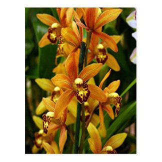 Orange brown orchid flowers in bloom postcard