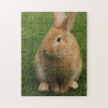 Orange Bunny Rabbit Jigsaw Puzzle