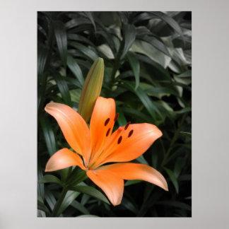 Orange Burst Poster