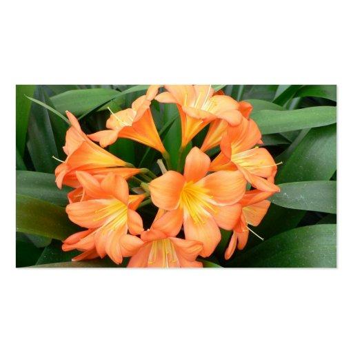 Orange Bush Lily Flower or Natal Lily Business Card