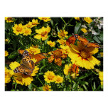 Orange Butterflies on Coreopsis Poster