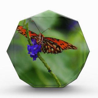 Orange Butterfly Award