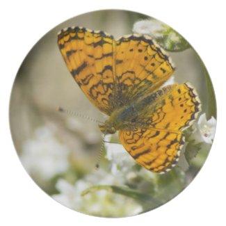 Orange Butterfly Dinner Plates