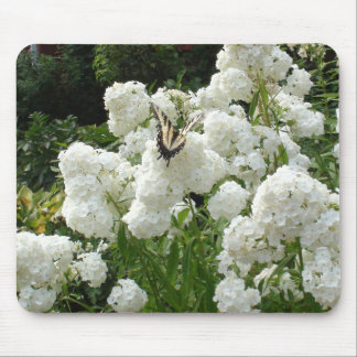 Orange Butterfly on a White Flowers  Mouse Pad