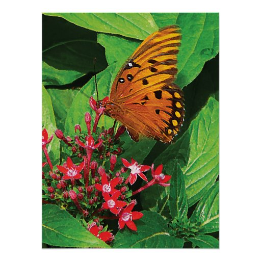 Orange Butterfly on Kalanchoe Posters