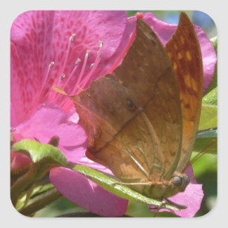 Orange Butterfly on Pink, Real Photo Sticker