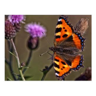Orange butterfly on purple thistle flower postcard
