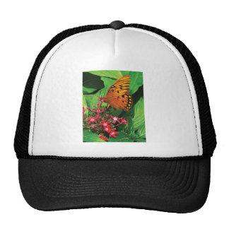 Orange Butterfly on Red Kalanchoe Hat