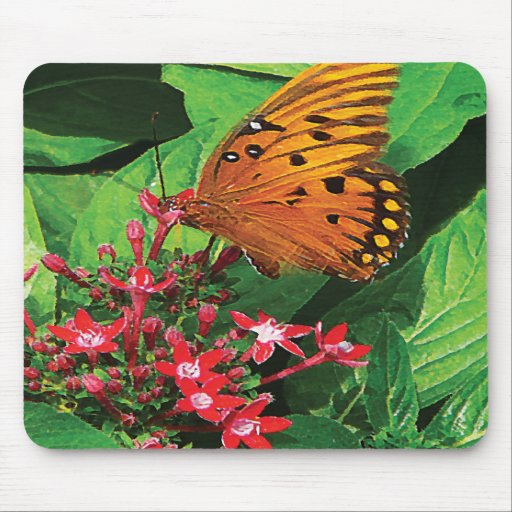 Orange Butterfly on Red Kalanchoe Mousepads